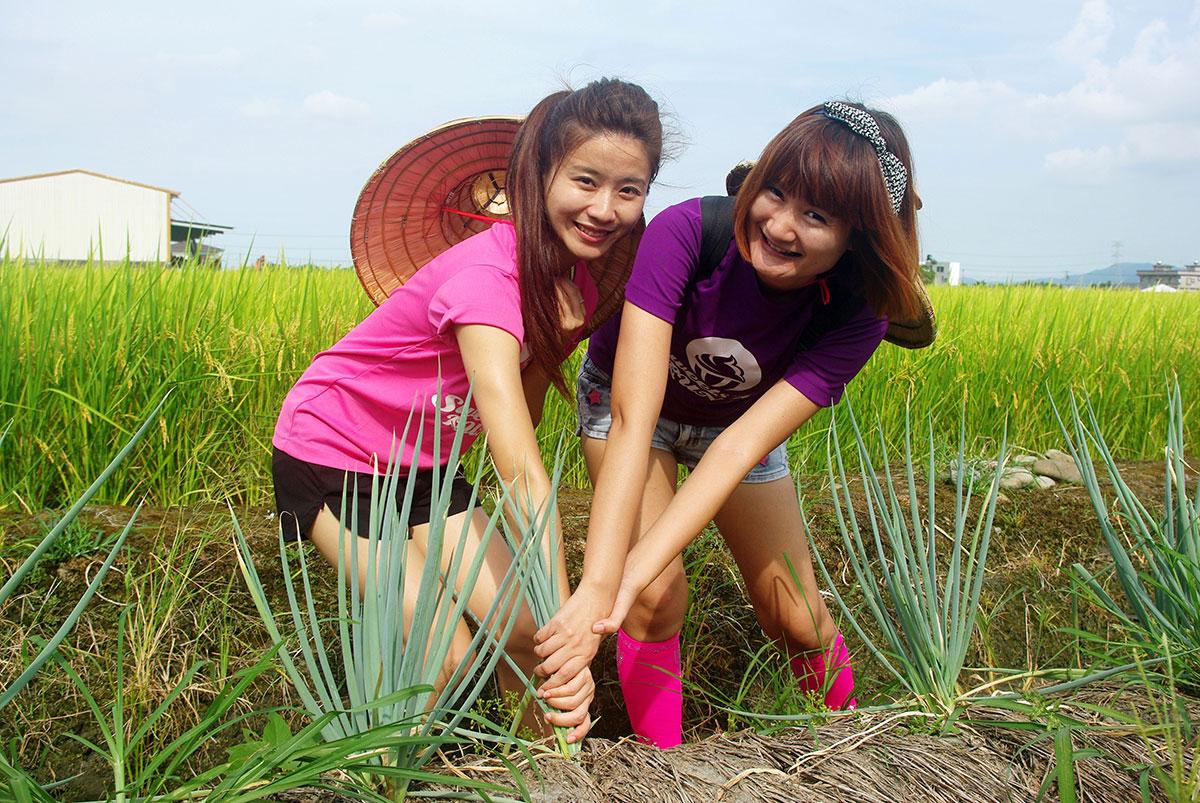 03上將蔥體驗農場帶遊客體驗「偷挽蔥,嫁好尪」的樂趣。