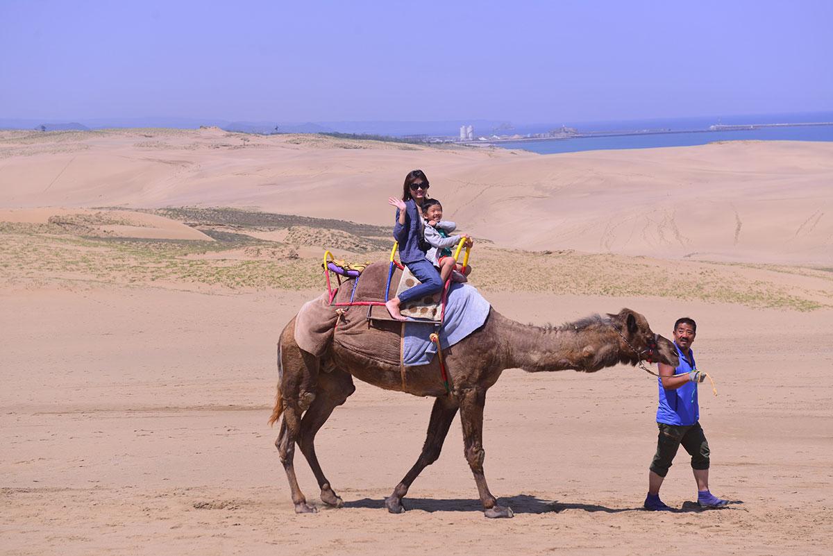 05鳥取砂丘駱駝體驗,大人小孩可以一起乘坐。