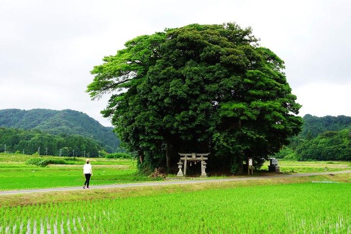 11龍貓森林