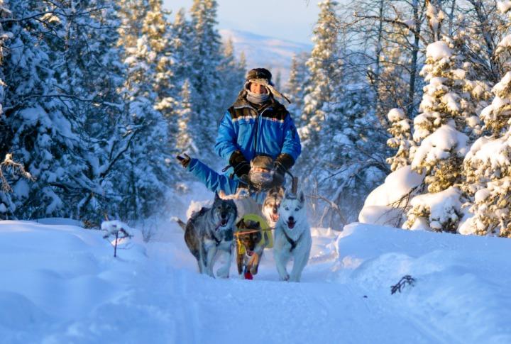 05.狗雪橇穿越冰樹枝隧道,這根本是童話故事中場景。