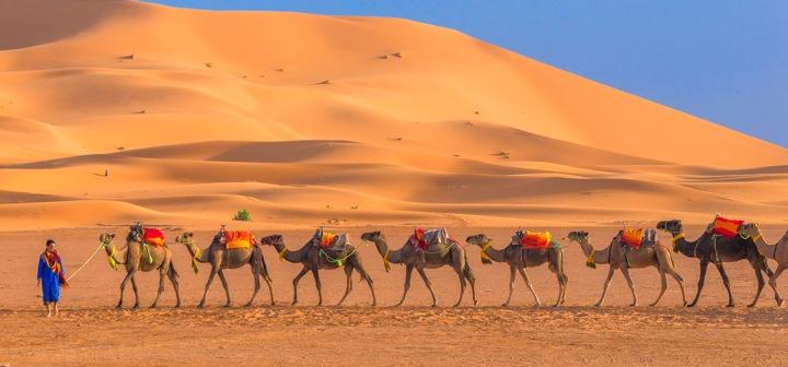06.每日傍晚在沙漠入口處會看到一隊隊駱駝,準備載旅客進入沙漠中的營區。